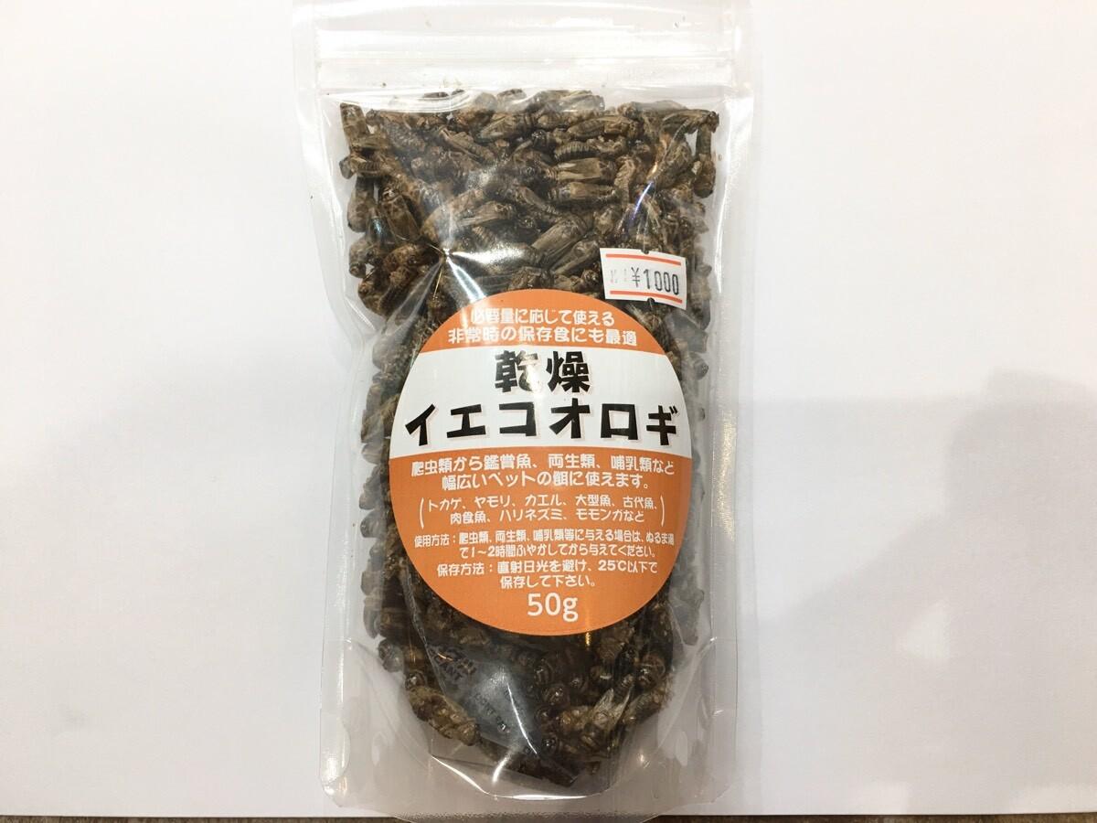 画像1: 乾燥イエコオロギ50g(約500〜600匹入り) (1)
